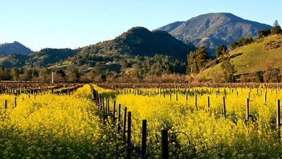 Calistoga's Mustard, Mud & Music