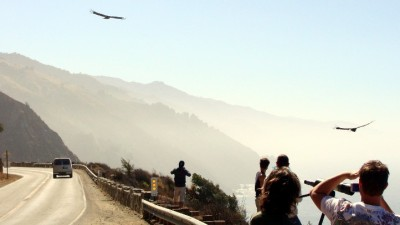 Feathers in Flight: A Condor Celebration