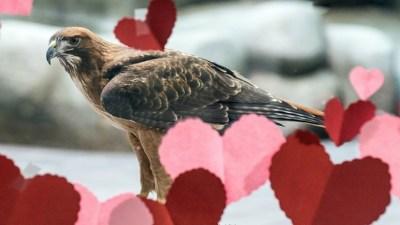 Wild Valentine's at Lindsay Wildlife Experience
