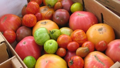Fairfield Tomato Festival