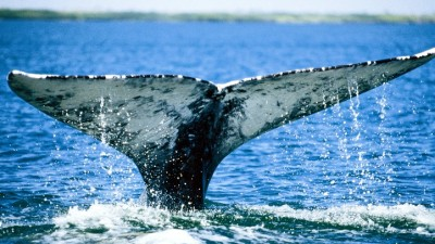 Ocean Astonishing: Whalefest Monterey