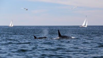 Monterey Bay: Marvel at Whale Majesty