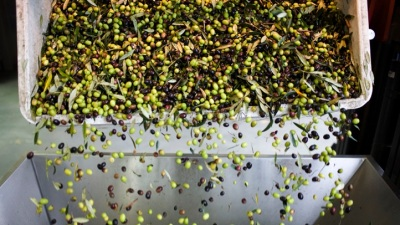 Fresh Olive Oil Day at Round Pond Estate