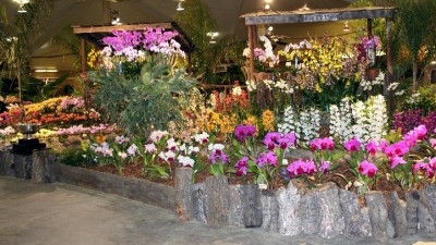 Orchids Abloom in Santa Barbara