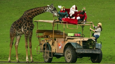 Santa on Safari