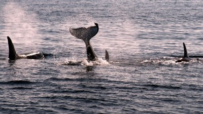 Long Beach Whale Cruises