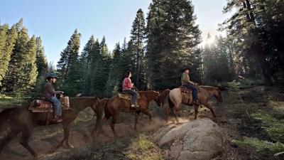 Sequoia Horseback Riding