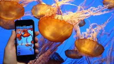 Summertime at the Monterey Bay Aquarium