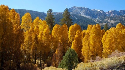 Foliage Time: See Peak Color