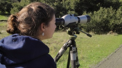 The Mayacamas Christmas Bird Count
