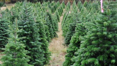 Goodbye Halloween, Hello Christmas (Tree Farms)