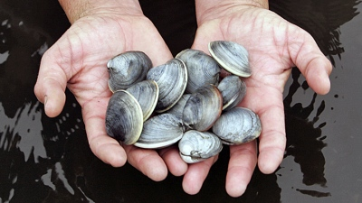 Clams, Clams, Clam Chowder, Clams: Pismo Party