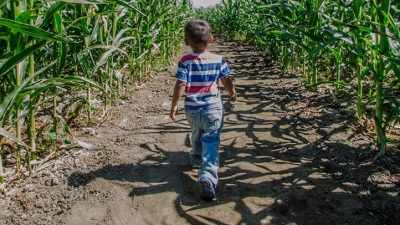 Big Corn Horse Maze: Just Ahead