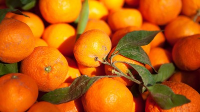 Citrus Reigns in Sonoma County
