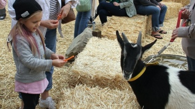 Ventura Farm Day: Visit 20+ Farms