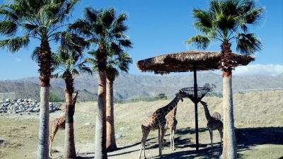 Living Desert: Feed the Giraffes