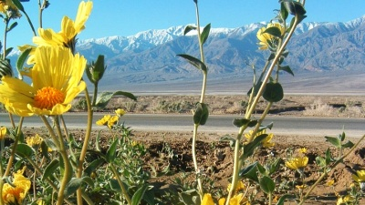 Signs of Death Valley's Springtime