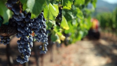 California Wine Month: Flavorful Festivals