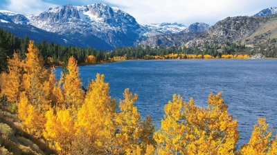 Mountain Gold: June Lake October