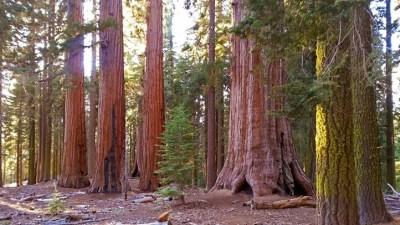 Yosemite's Mariposa Grove Has a Reopen Date