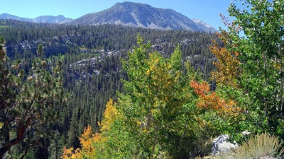 Trees Are A-Turning: Mono County Fall