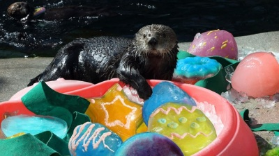 A Very Otter Easter