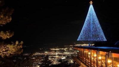 Holidays High Up: Tram Tree