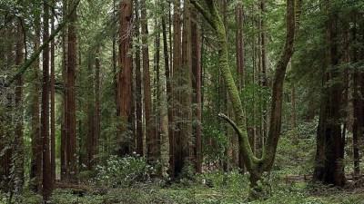 Romance in the Redwoods: Trees to Slugs