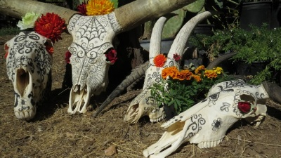 Safari West Halloween: The Beauty of Bones