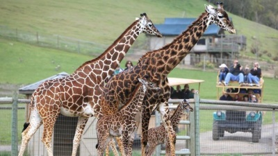 A Big 20th Birthday for Safari West
