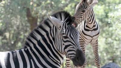 Safari West: Reopening Dates Announced