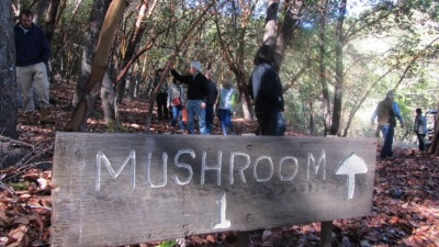 Hopland Happy: Mushroom-Searching and Wine-Sipping