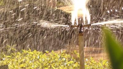 California Water Regulators are Water Wasters