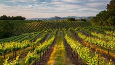 Season Pass It: The Wine Road