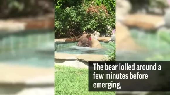Bear Relaxes In California Hot Tub On Hot Summer Afternoon Nbc Bay