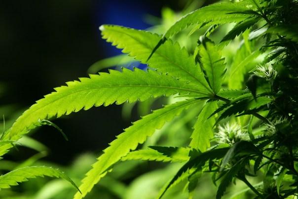 Timeline: Marijuana Legalization in California