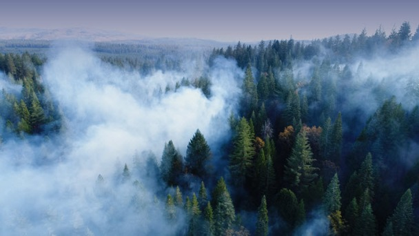 Current Efforts to Prevent Mega Fires Leave State Vulnerable