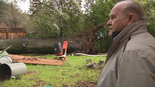 'Sounded Like an Earthquake': East Bay Trees Collapse Amid Latest Storm