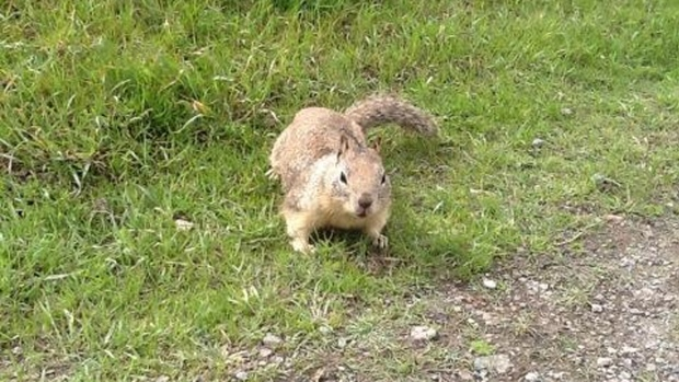 [BAY] Berkeley to Kill Squirrels Accused of Spreading Toxins
