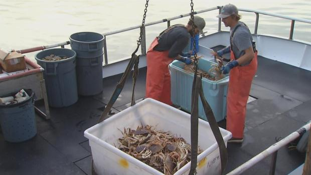 [NATL-BAY] Unprecedented Crab Fishing Delay Because of Potentially Deadly Domoic Acid