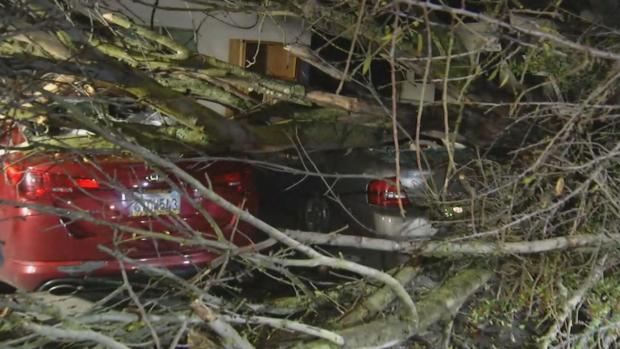 Tree Crushes Two Cars in East Palo Alto
