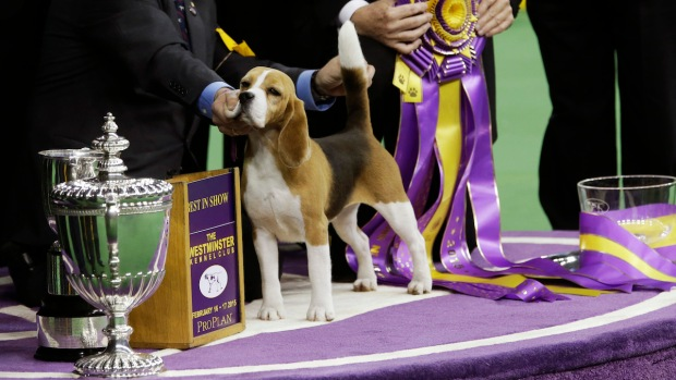 [NATL] 2015 Westminster Dog Show
