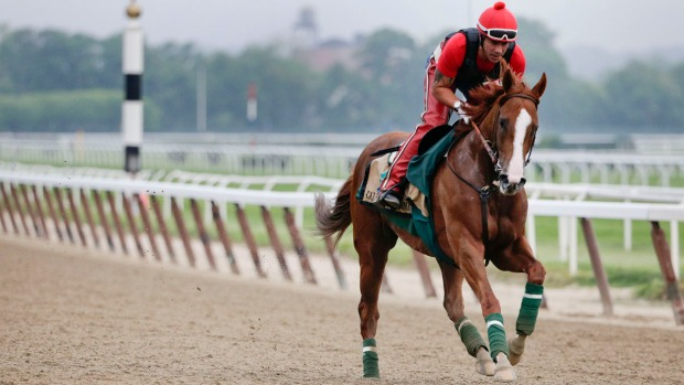 [BAY] California Chrome: Triple Crown Hopeful Has Bay Area Ties