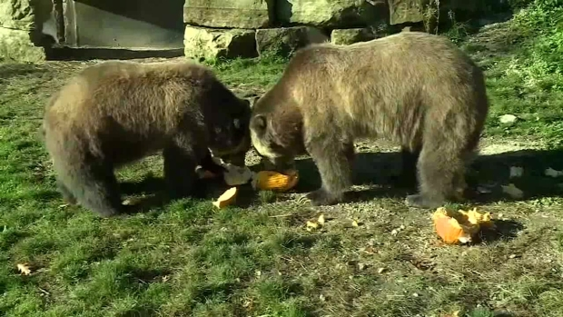 [NATL-DFW] Bears Predict World Series Winner