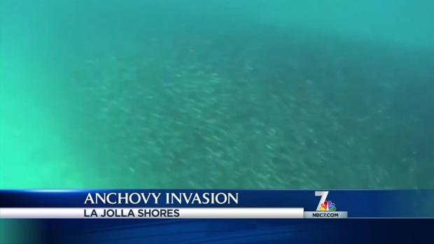 [DGO] Anchovy Invasion Continues in La Jolla
