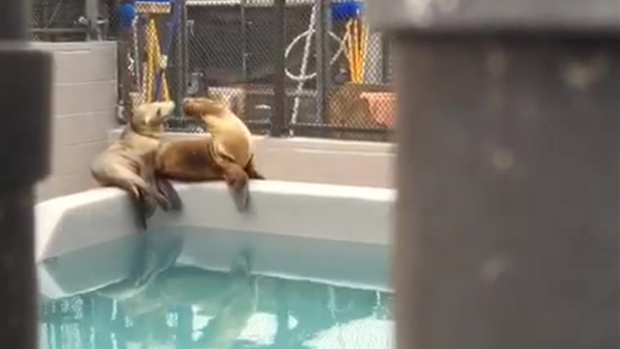 [BAY] Sea Lions at the Marine Mammal Center