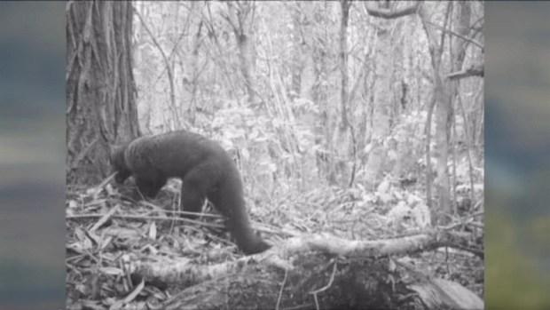 [BAY] Raw Video: Fishers Surveillance Video