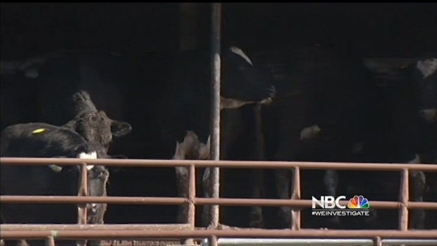 4 at Slaughterhouse Behind Beef Recall Indicted