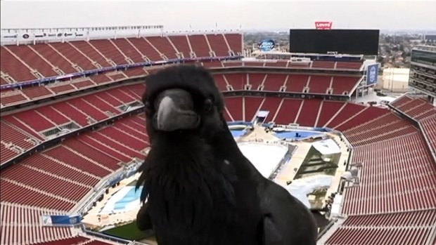 RAW VIDEO: Crow Videobombs Levi's Stadium Cam