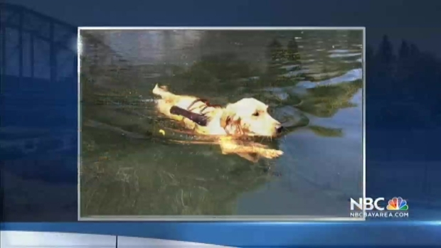 [BAY] Dog Dies After Swimming in Russian River